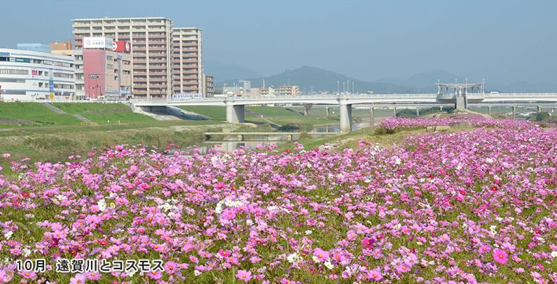 10月遠賀川とコスモス